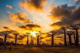 马达加斯加.jpg